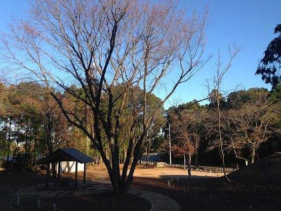 桜の葉は落ちてしまったようですが、遠くのクリは間もなく落ちる感じでした。