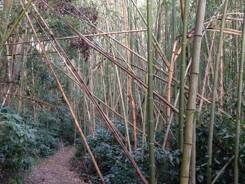 たまに路を整備していますが、周りの竹林までは手が回らず腐ったりして竹が路をふさいだり、昼なお暗い竹林になっています。